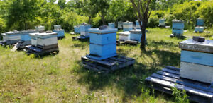 Bees Farm and equipment for Sale