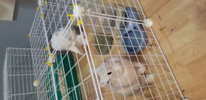 Two rabbits to rehome
