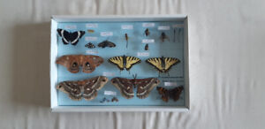 Bug collection - Butterflies, Moths, and others