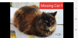 Lost cat Reward £100