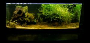 20 gallon long