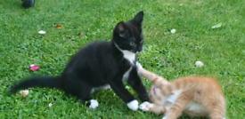 Adorable looking male kitten