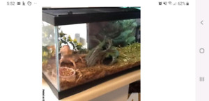 Looking for a bearded dragon with a tank for a cheap price