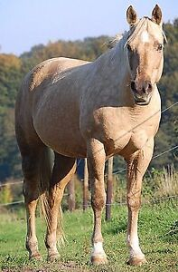 Wanted Western horse lease