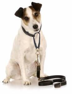 April & David's Dog Walking - $20/ Hr Capalaba Brisbane South East Preview