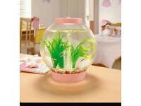 Pink baby biorb fish tank and 1 fish