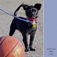 """Young Female Dog - Terrier: """"Linda"""""""