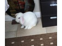 White rabbit, hutch and carrier