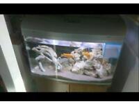 Aqua One AR 850 fish tank, cabinet and fish