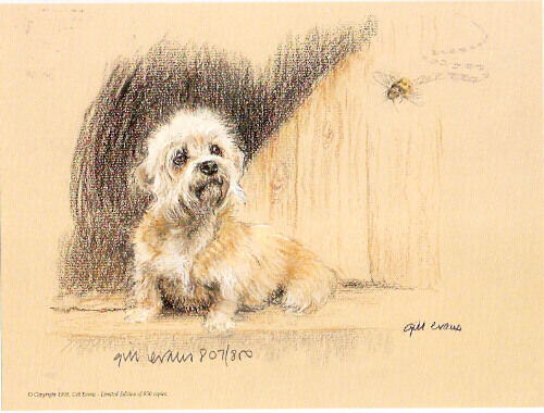 Dandie Dinmont Terrier Limited Edition Art Print by UK Artist Gill Evans*