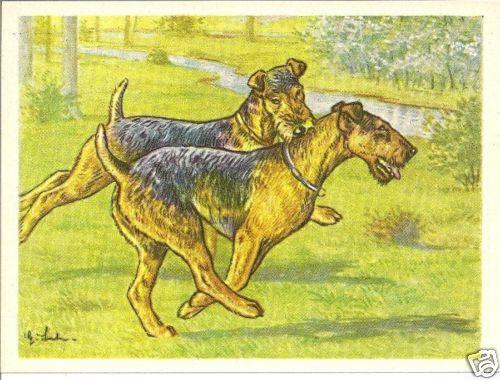 1952 Dog Art Print Card Austria Tobacco Company Bildwerk WELSH LAKELAND TERRIER