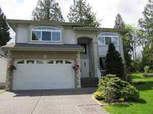 nice 3 bd Basement Suite for rent in Maple Ridge