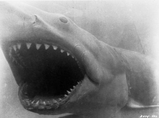 Hooper vs Jaws: Jaws wins