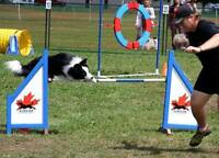 Dog Agility - For the Love of Dog!