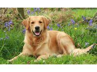 dog/cat sitter/housekeeper