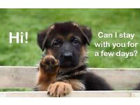 Love Dogs? Dog Loving Volunteers wanted