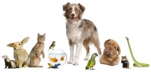 Home away from home - Student offering Pet Boarding & Daycare