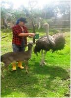 Support the conservation efforts of the Azuay animal shelter