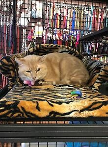 available for adoption at pet valu upper james