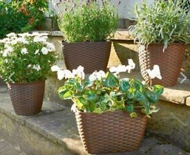 Set of 4x Rattan Planters - Also available in dark brown
