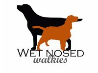 WET NOSED WALKIES, HAMPSHIRE - Dog walker, home boarding, alternative to kennels