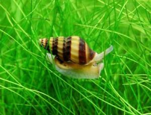 Beginner Aquarium Plants! Very easy to care for! Shipping!