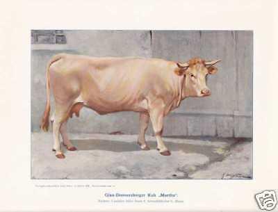 """Glanrind-Kuh """"Martha"""" Rinderzucht Farbdruck Rinderrasen 1925 Reprint"""