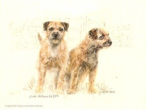 Border Terrier Limited Edition Print by UK Artist Gill Evans We