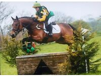 Rider available horse/pony & schooling livery