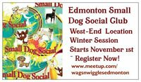 Edmonton Small Dog Social Club - Small Breed Play In West-End