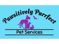 Fully insured dog trainer, dog walker, pet sitting service provider.