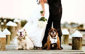 Wedding Doggy Chauffeur & Caregiver Oakville / Halton Region Toronto (GTA) image 1