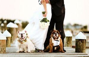 Wedding Doggy Chauffeur & Caregiver Oakville / Halton Region Toronto (GTA) image 1