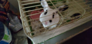 Rabbits & house for sale