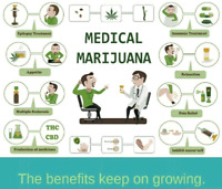 Cannabis Medical growing license