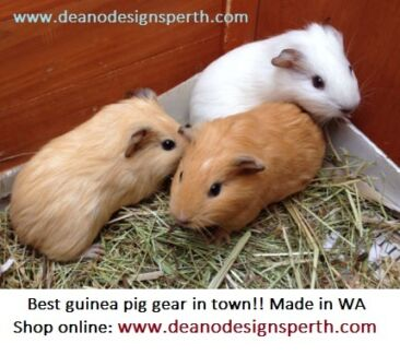 Fleece cage liners, lap pads, cuddle sacks and more..... Brisbane Region Preview
