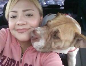 """Young Female Dog - Shar Pei-Pit Bull Terrier: """"NEW- DAISY"""""""