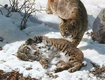 Carl Brenders LOVE IS IN THE AIR, Bobcats, giclee canvas, ARTIST PROOF A/P#3