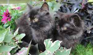 Super Cute Kittens- Need homes!!!!