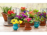 Plant Pots Wanted! (Old/vintage, non-plastic)