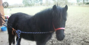 Looking for a kid friendly pony