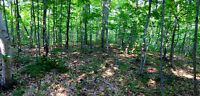 """""""HEART OF DEER COUNTRY!"""" - 2 ACRE MANITOULIN LOT"""