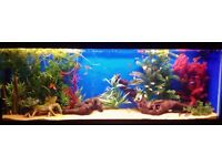 **LOOK!** 4ft Aquarium Fish tank with stand hood lights and gravel. 120x30x45cm