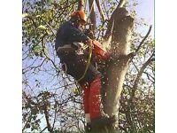 B&M Tree Surgeon