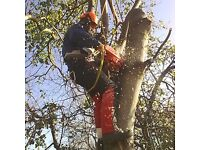 TREE SURGERY / HEDGE PRUNING / GARDENING / TREE SURGEON