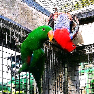 Wanted: I take your unwanted parrots/birds.