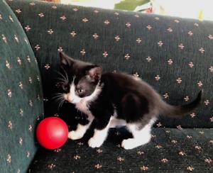 Kitten for good home