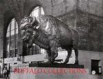 buffalocollections