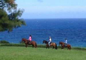 Large oceanfront ranch available for equestrian use/ development