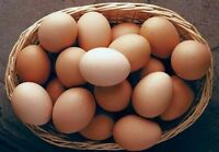 Organic brown EGGS in Caledon